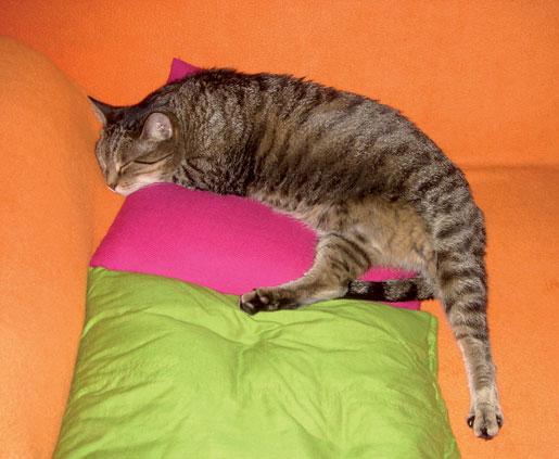 Скитникът и котката