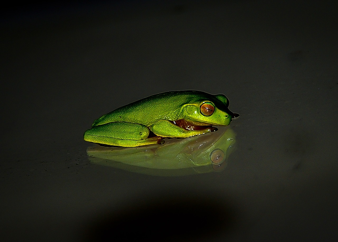 frog-425156_1280