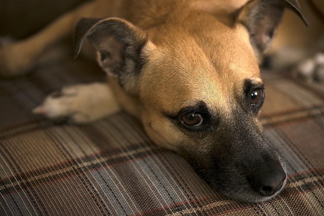 dog-460583_1280