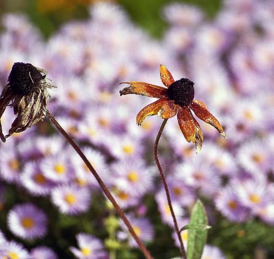 flower-428368_1280