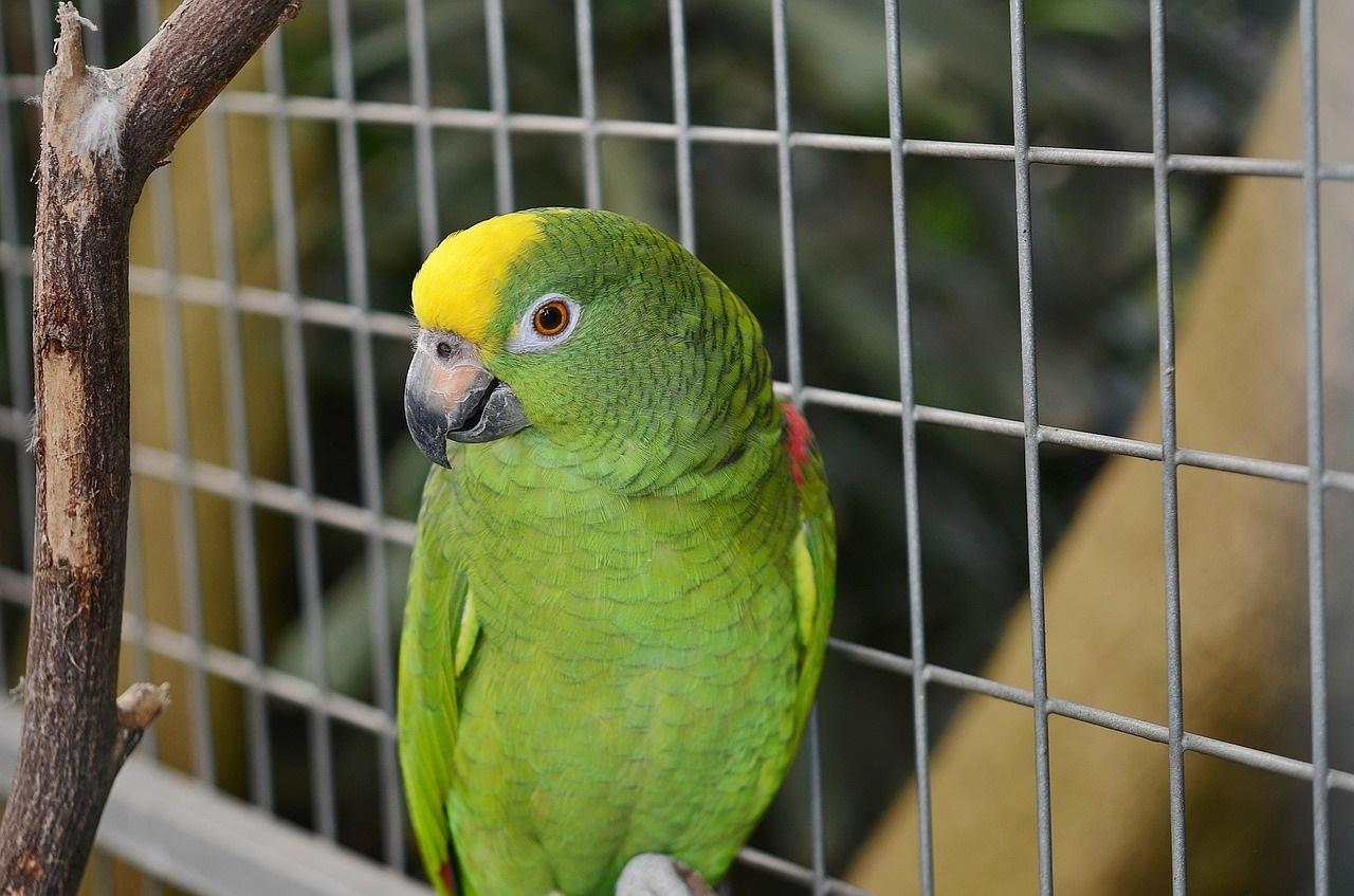 parrot-417967_1280
