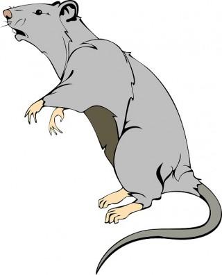 rat-312046_1280