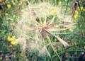 Ода за сенната хрема