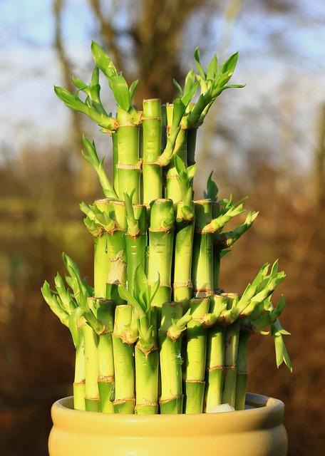 bamboo-588339_640