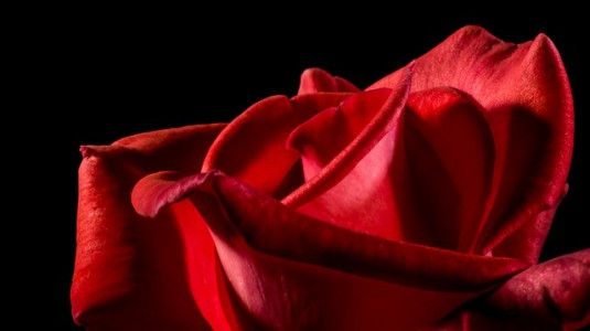 red-rose-320892_640