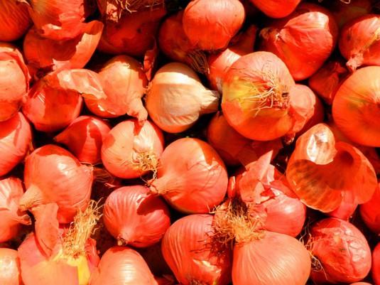 onion-181999_640