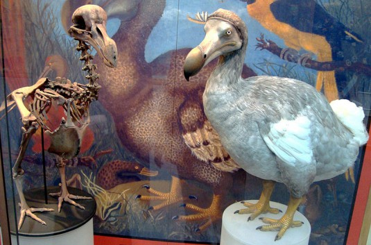 Dodo_display