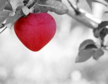 Слабата памет на любовта