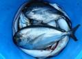 Рибата – божествената храна!