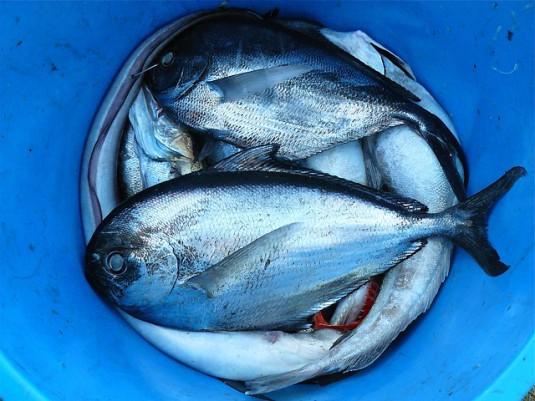 fish-422543_640