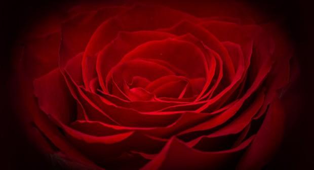Кой, кой да ми каже, че розите цъфтят всеки месец