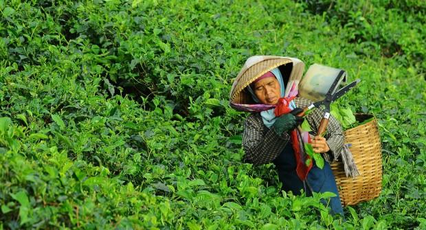 Чаят – напитка с история