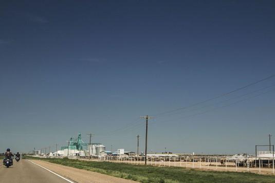 Посрещане от хиляди говеда в Тексас