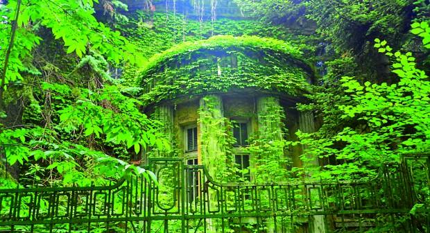 Дворът, който чезне като черноморската скумрия