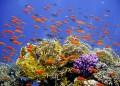 Карибско море – 52 000 кв. км коралови рифове