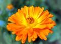 10 разумни причини да използваме хомеопатия