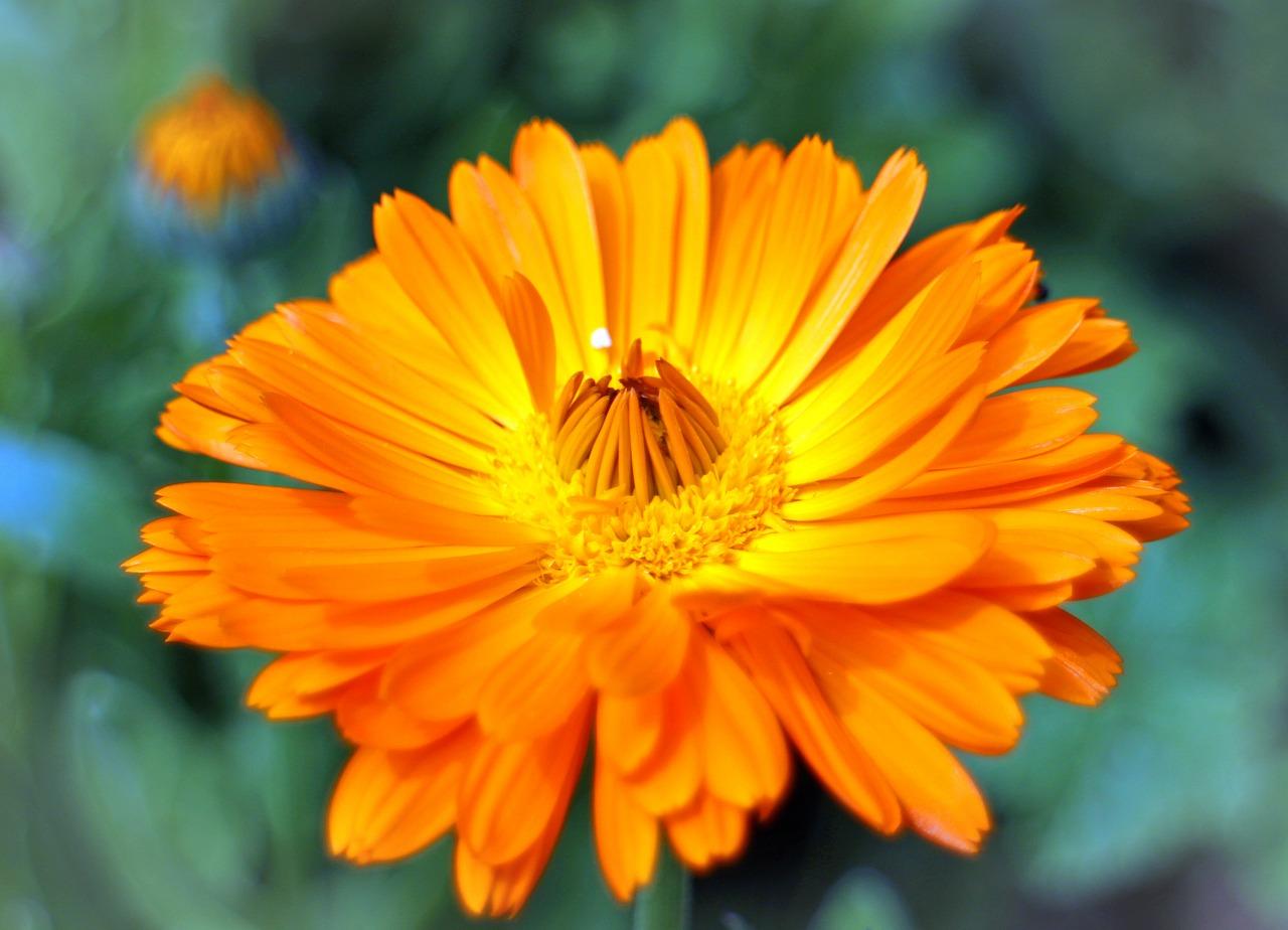 flower-373853_1280