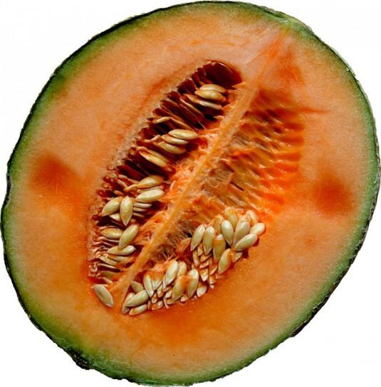 melon-218168_640