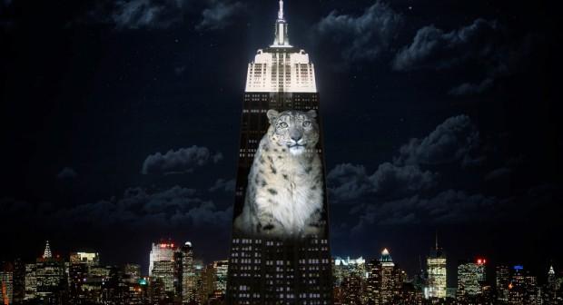 Застрашени животни на фасадата на Empire State Building