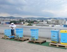 Над 2 милиона в подкрепа на градското пчеларство