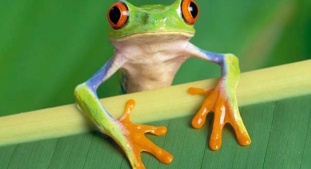 Изяж тази  жаба! 5 начина децата сами да управляват времето си
