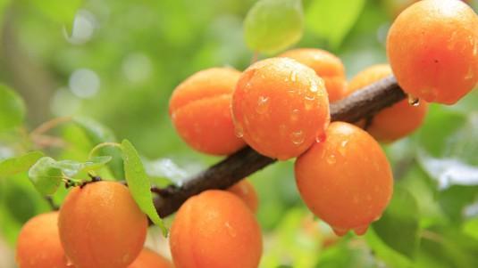 peaches-824624_640