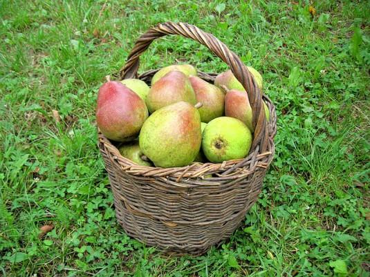 pears-493341_640
