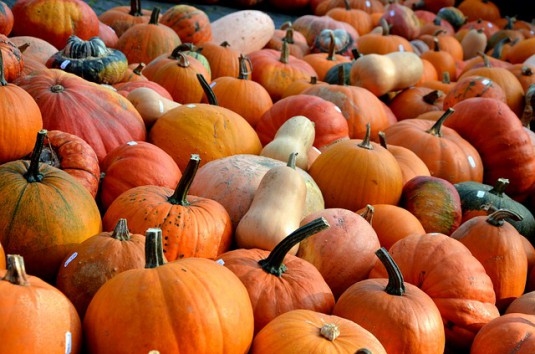 pumpkins-506422_640