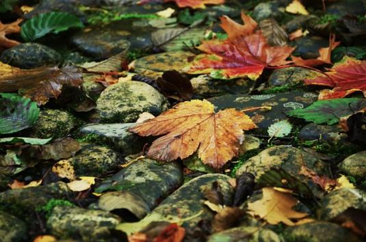 autumn-979667_640