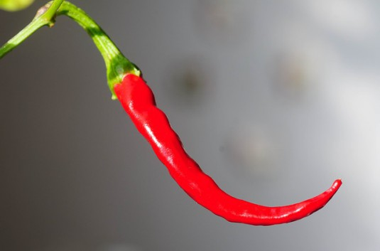 chili-peppers-726985_640