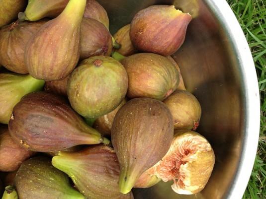 figs-183043_640