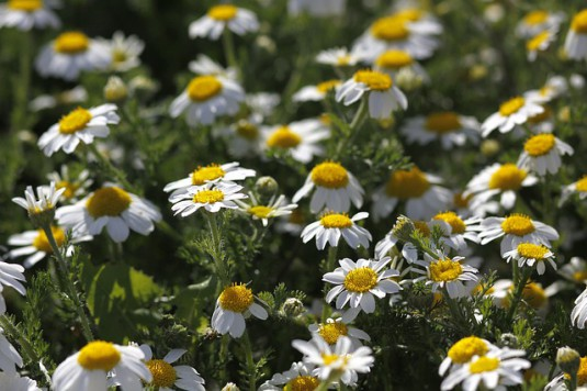flowers-686240_640