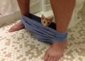 15 доказателства, че котките си правят каквото искат