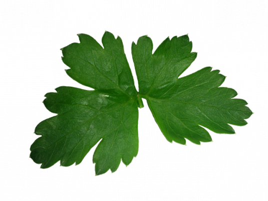 parsley-608104_640