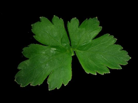 parsley-608104_640