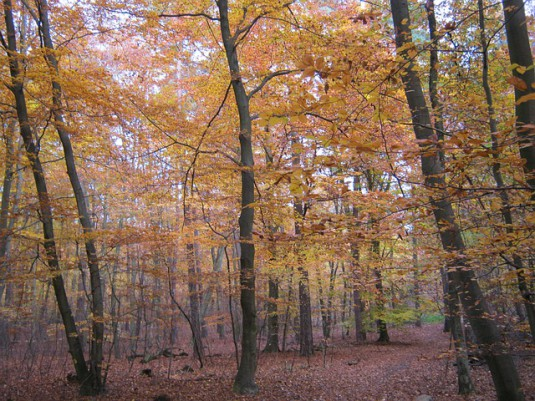 beech-wood-259574_640