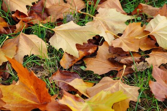 leaves-542940_640