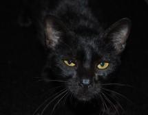 За черната котка и числото 13