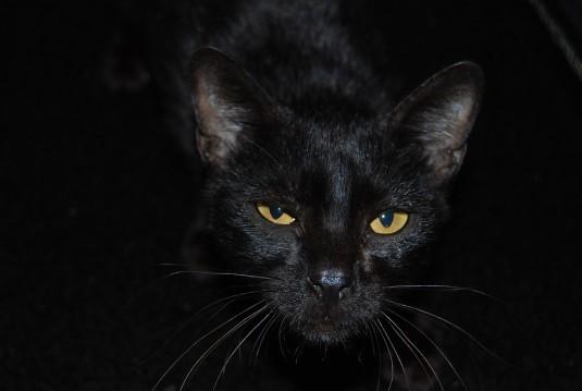 cat-768411_960_720