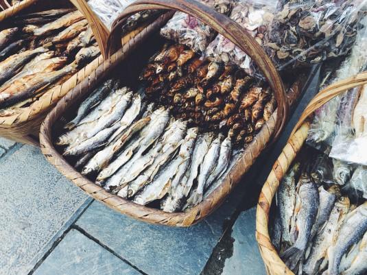 fish-895552_960_720