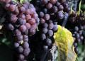Кои плодове топят мазнини