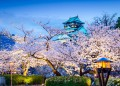12 магически снимки на цъфтящите вишни сакура