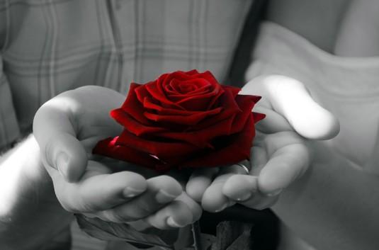 flowers-72235_960_720