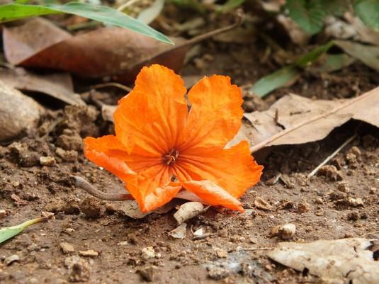 orange-184838_960_720