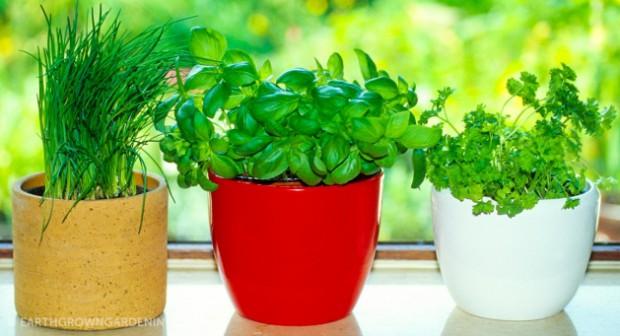8 билки и подправки, които лесно ще отгледате у дома