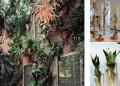Свежи идеи за градината вкъщи