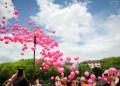 Над 1500 души се включиха в похода на Avon  срещу рака на гърдата