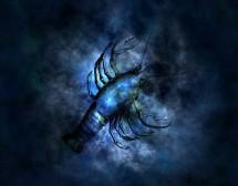 Лунните настроения на зодия Рак