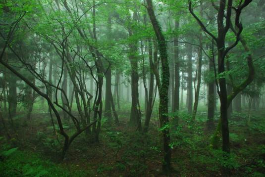 wood-867908_960_720