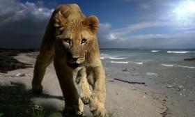 Жената Лъв диктува правилата на играта